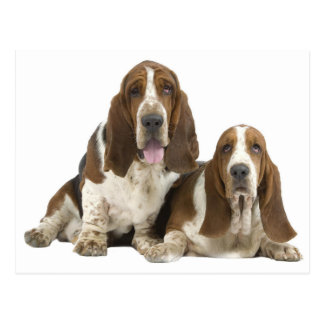 Basset Hound Puppy Dog Love, Hello Thinking of You Postcard