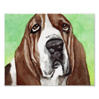 Basset Hound Watercolor  Art Prints