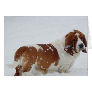 """Basset Hounds in the Wild"" series greeting cards"