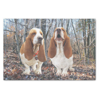 Basset Hounds in the Woods Tissue Paper