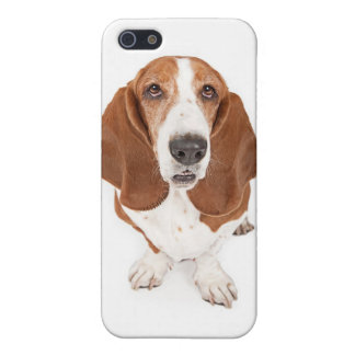 Basset ipod cover iPhone 5/5S case