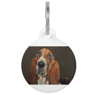 bassett hound 2 pet tag