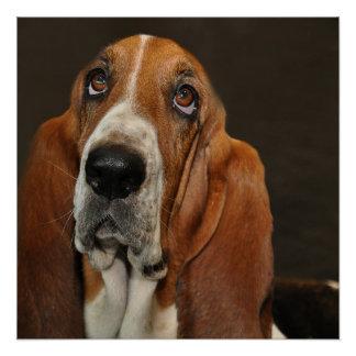 bassett hound 2 poster