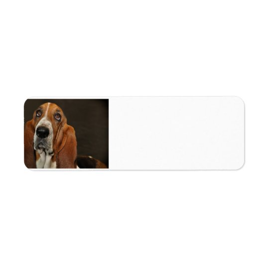 bassett hound 2 return address label