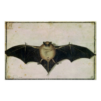 Bat, 1522 print