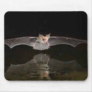 Bat drinking in flight, Arizona Mouse Pad