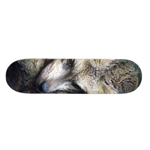 Bat Eared Fox Photo Closeup Kansas City Zoo Skateboard Deck