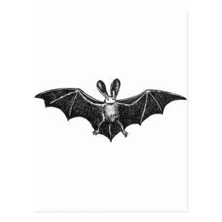 Bat illustration postcard