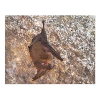 Bat In A Cave Postcard