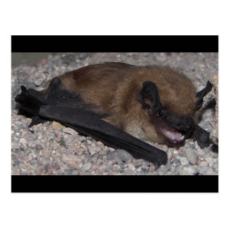 Bat In Cave Postcard