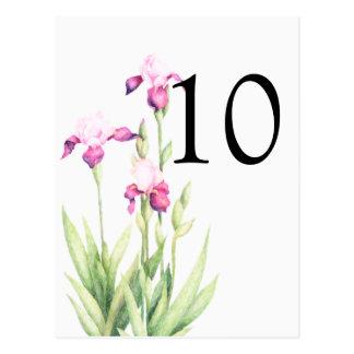 Bat Mitzvah Pink Irises Postcard