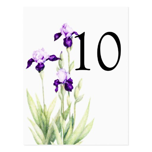 Bat Mitzvah Purple Irises Post Card