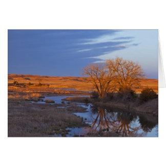 Bathed in sunset light the Calamus River Greeting Card