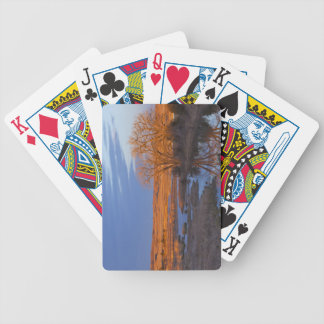 Bathed in sunset light the Calamus River Playing Cards