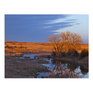 Bathed in sunset light the Calamus River Postcard