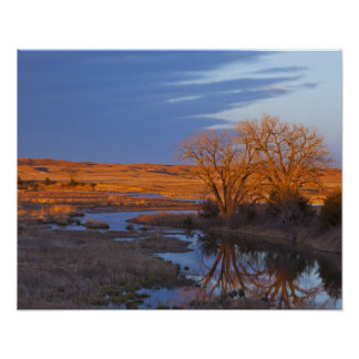 Bathed in sunset light the Calamus River Posters