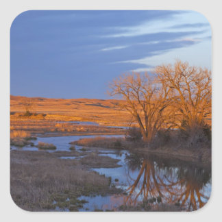 Bathed in sunset light the Calamus River Square Sticker