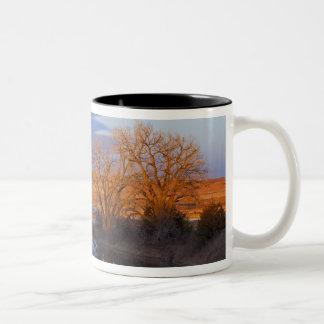 Bathed in sunset light the Calamus River Two-Tone Mug