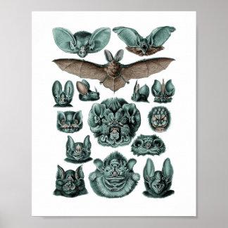 Bats by Ernst Haeckel Poster