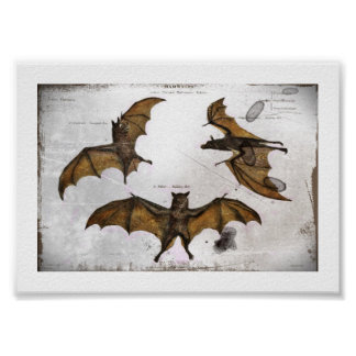 Bat's Educational Plate Poster
