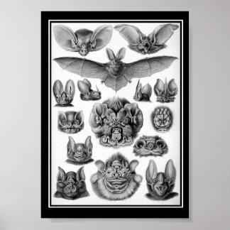 Bats! Poster