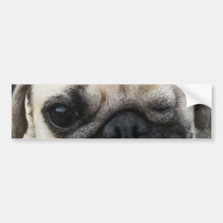 Bauwk ... Pug Dog ... かわいい 子犬 Bumper Sticker