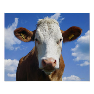 Bavarian cow against blue sky poster