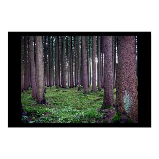 Bavarian Forest Poster