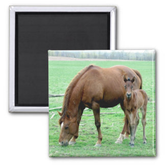 Bay Mare and Her Colt Square Magnet