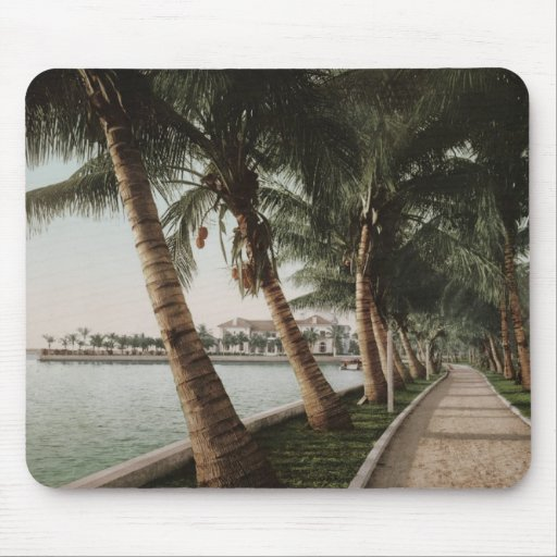 Bay Palm Trees Mousepads