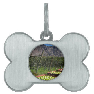 BC Apple Harvest Pet ID Tag