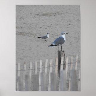 Beach ~ 25.5 poster