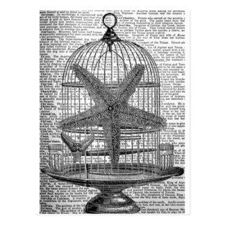 beach dictionary print steampunk Birdcage Starfish Postcard