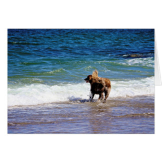 Beach Dog Card