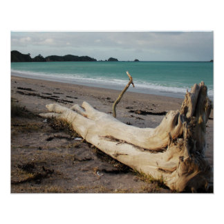 beach driftwood photo art poster
