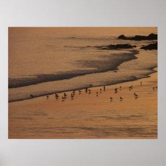 beach evening print
