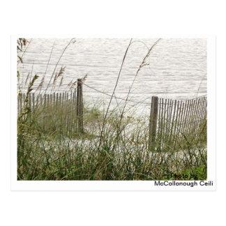 Beach Grass and Fence Postcard