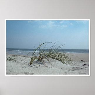 Beach Grass Print