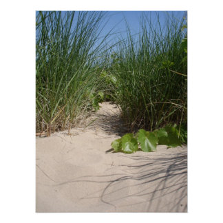 Beach Grass, Warren Dunes, MI Poster