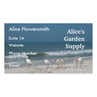 Beach Ibis- Business Card