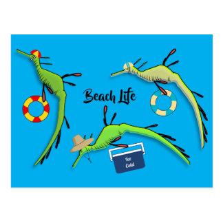 Beach Life of Sea Dragons Postcard