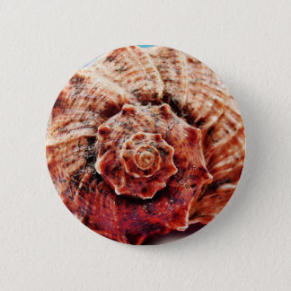 Beach Ocean Sea Shell 6 Cm Round Badge