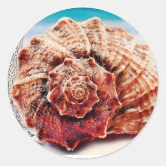 Beach Ocean Sea Shell Classic Round Sticker