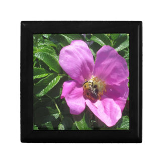 Beach Plum Rose with Bee Small Square Gift Box
