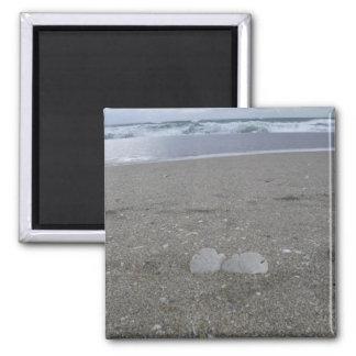 Beach Sand Dollars Magnet