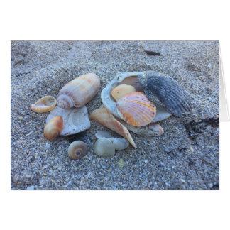 Beach Sea Shells Card