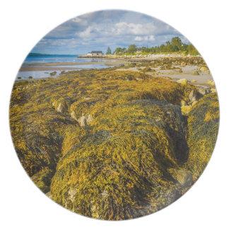 Beach Seaweed Plate