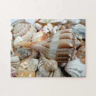Beach Shells Lightning Whelk Puzzle