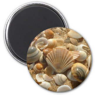 Beach Shells Magnet