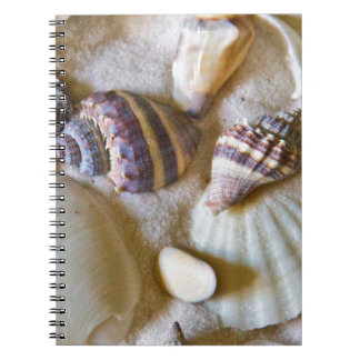 Beach Shells Theme #2 Notebooks